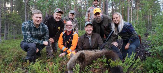 Björnjakten i full gång – kvoten snart fylld