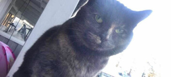 Katten Sooki i Pilgrimstad kan ha blivit ihjälslagen