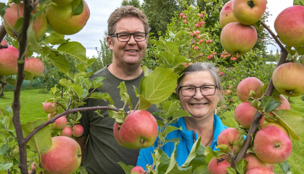Mikael och Sara Wallin i sin sjuåriga fruktträdgård i Stensån.