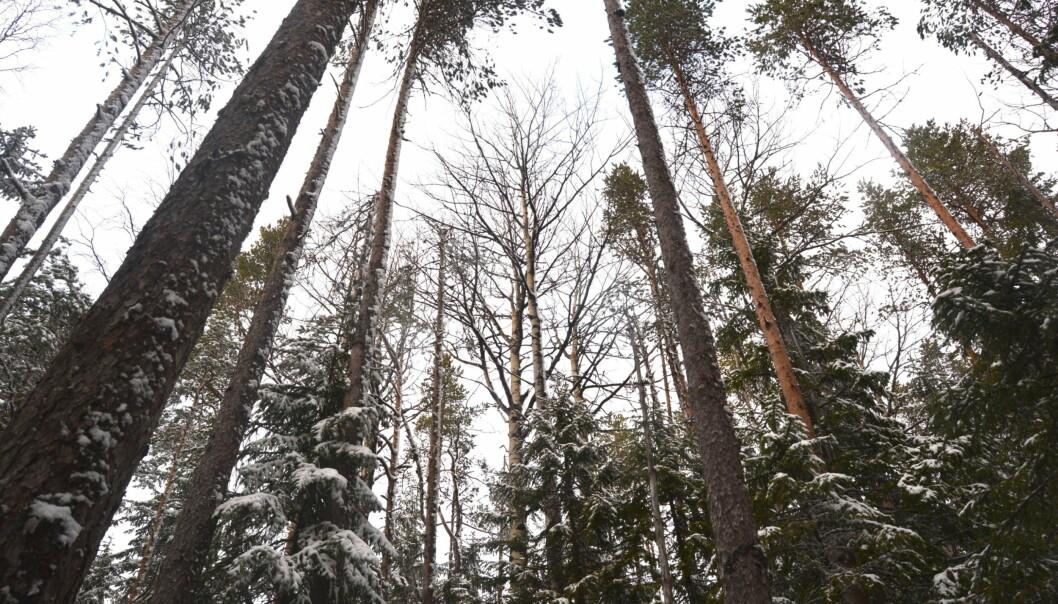 Staten tar omtag när det gäller ersättningen i skogsprocessen i Härjedalen. Nu överklagar man beslutet att inte ge prövningstillstånd.