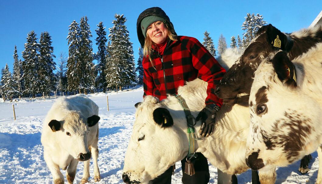 Cirkeln sluten, Erika har sålt gården i Särvsjö och flyttat hem. Där har pappa Per-Martin köttdjur och Erika har idag 15 kor.