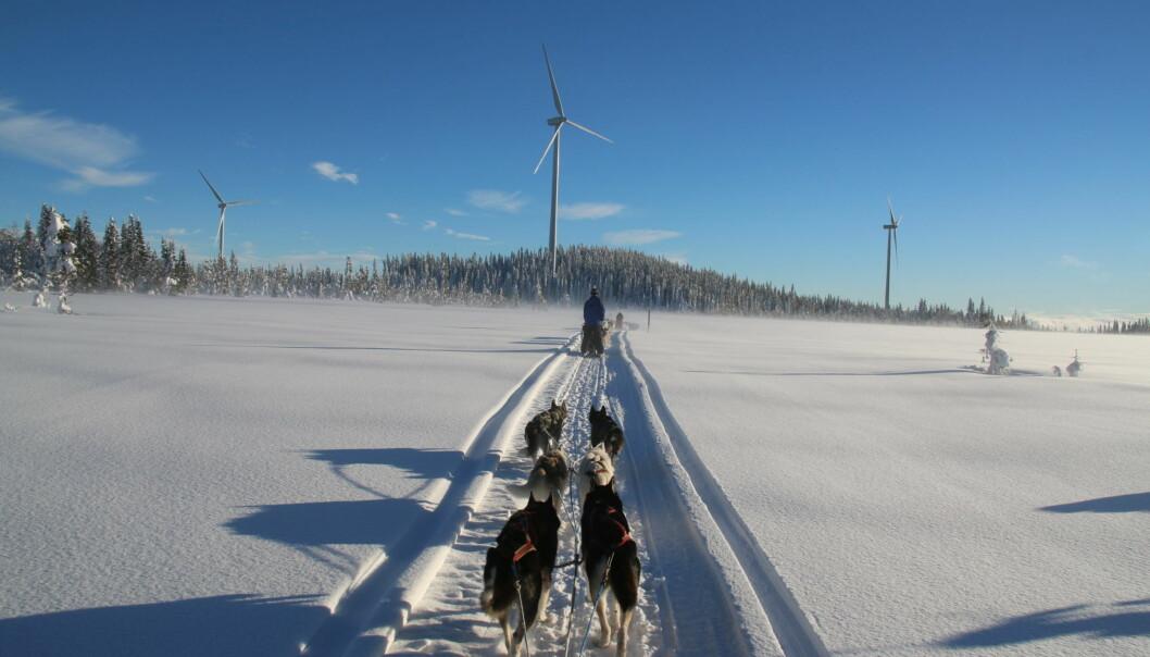 De europeiska turisterna som besöker Siberian Adventure  låter sig inte störas av vindkraftparken i Havsnäs. En park som nu hotas av konkurs.