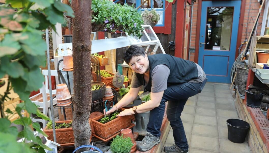 Christl Kampa-Ohlsson påtar i jorden, snart kommer det hon odlar i krukorna att hamna på kundernas tallrikar.