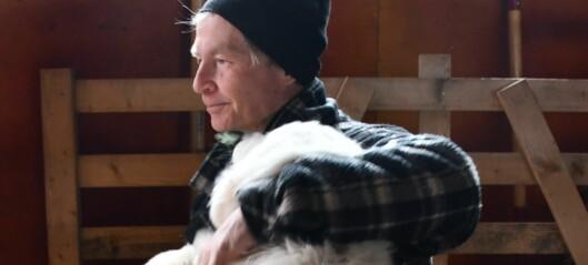 Herdehundar ska vakta får i Älghallen