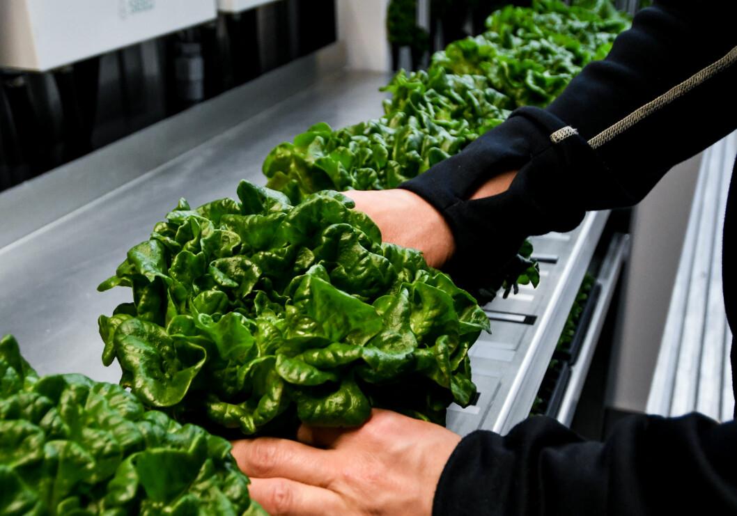 Produkterna som odlats i containern har sålts under namnet Fjällodlat, vilket nu har fått kommunen att reagera som kräver att namnet tas bort.