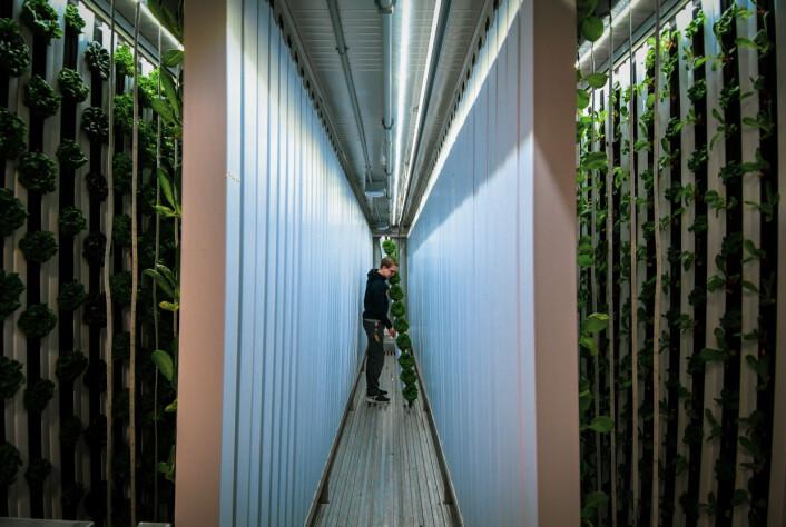 Med container-odlingen blev man ett av de första företagen i Sverige att använda sig av en modern teknik som gör det möjligt att odla oberoende av årstid, och därmed erbjuda färskt lokalproducerat grönt året runt