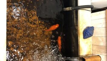 Såväl djur som människor trivs i butiken. Eivor uppskattar att fiskarna flyttade in för mellan 5 till 10 år sen.
