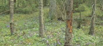 360 miljoner till fjällnära skog