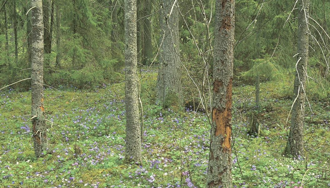 – Tillskottet på 360 miljoner ger oss förutsättningar att bilda områdesskydd på en liknande nivå som 2020 och även öka omfattningen av naturvårdande skötsel jämfört med fjolåret, säger Johan Åberg, områdesskyddsspecialist på Skogsstyrelsen.