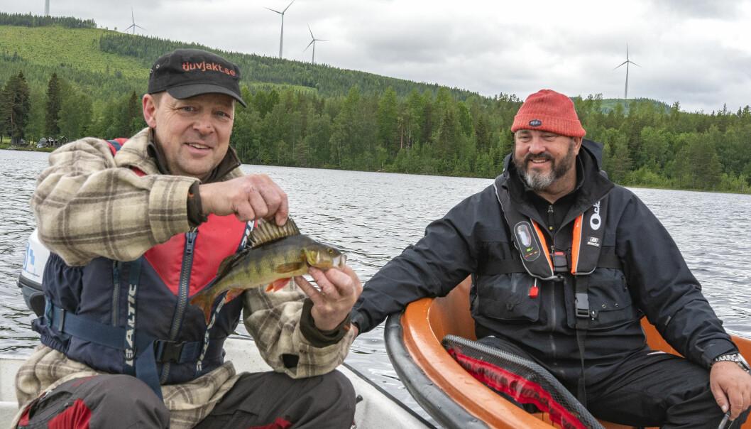 Martin Bodin, som körde följebåten i Handsjön, fick en fin tre hektos abborre när JT var med. Johan Broman fick vänta tills kvällsgäddorna högg på hans krokar.
