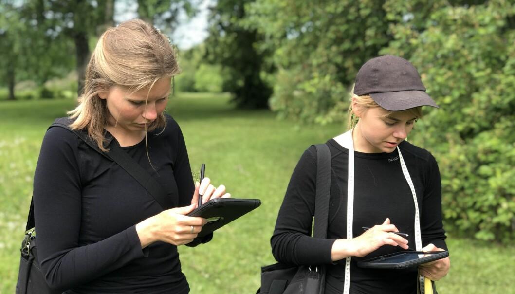 Frida Lundgren och Agnes Jonasson inventerar trädens mående i Östersunds parker.