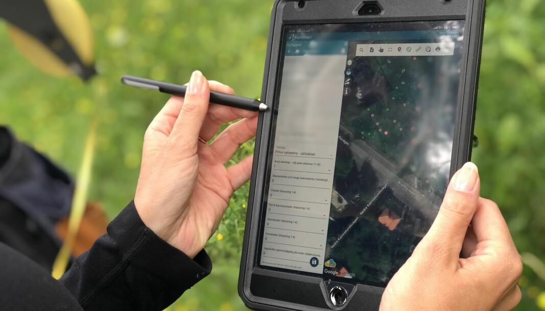 Programmet Kartsmart fylls med information om bland annat stammens omkrets, geografiska plats och om det finns några skador på trädet.