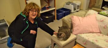 Många hemlösa katter omhändertas av Djurskyddet i länet