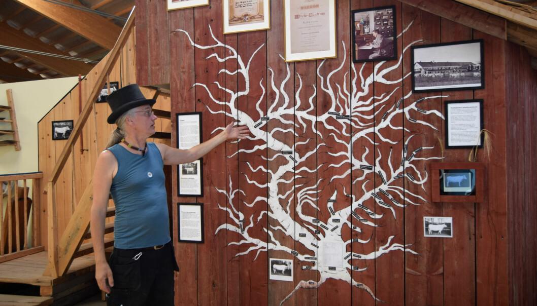 MiQ framför utställningens ko-släktträd