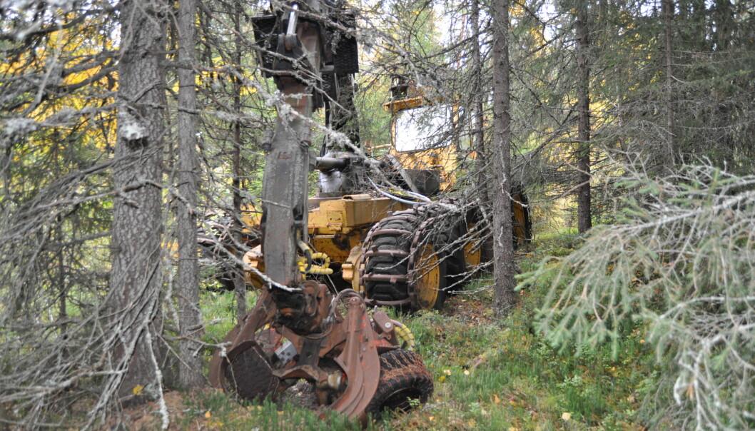 """""""Skogs-Jan"""" aggregatet kvistade och kapade stockarna i bestämda längder. Fällde träden gjorde en skogsarbetare."""