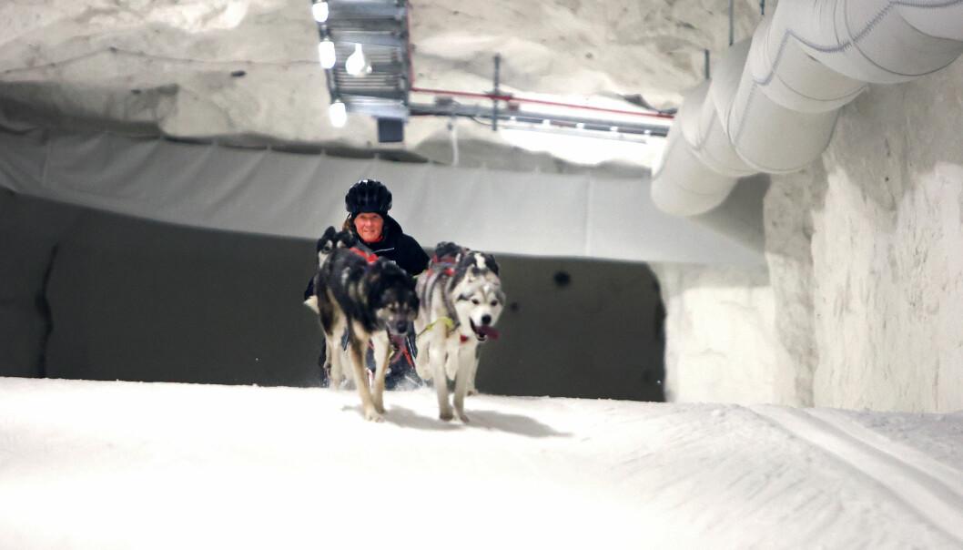 """""""Hundarna tyckte att det var jätteroligt att få springa av sig. De var lite brydd över fläktarna första varvet, men sedan flöt det på bra"""", säger Niklas Andersson."""