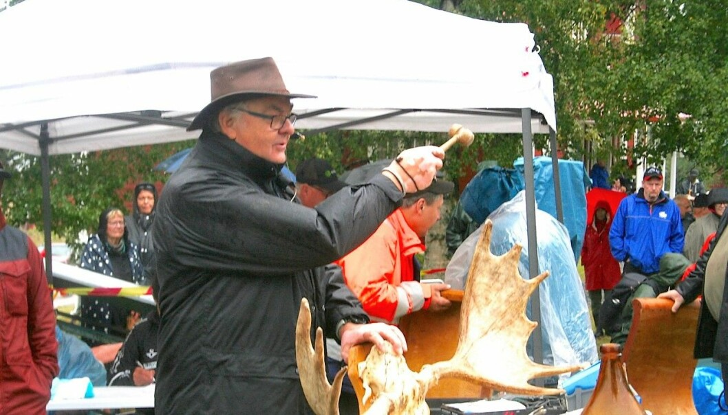 Herr Haglund klubbar bort ett älghorn.