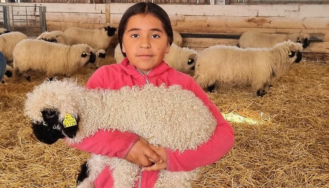 Livia med ett walliskt svartnosfår. Karaktäristiskt för rasen är de svarta partierna i den annars vita ullen.