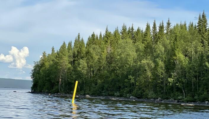 Här är en markeringspinne så nära land att det är svårt att passera. Den ligger inte där Länsstyrelsen beslutat att de yttre hörnmarkeringarna på fiskodlingens område ska vara.