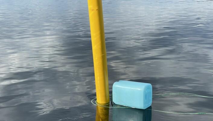 En boj är förtöjd med en rep som är lindat två varv kring en markeringspinne. Oscar Herlitz menar att det räcker med att det blåser, som det ofta gör ute på Vattudalen, för att linan ska silta sig och riskera att ställa till med skador på förbikörande båtar och människor.