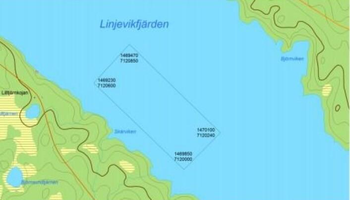 Hörnkoordinaterna på fiskodlingens område i Linjeviken i Länsstyrelsens beslut från 2005. Jämför med bilden på koordinaterna där markeringspinnarna står idag, som dessutom bara är tre stycken och på kassarnas södra sida. Den norra sidan är helt omarkerad för förbipasserande båtar.