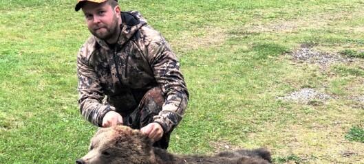 Årets björnjakt har startat – många björnar sköts första helgen