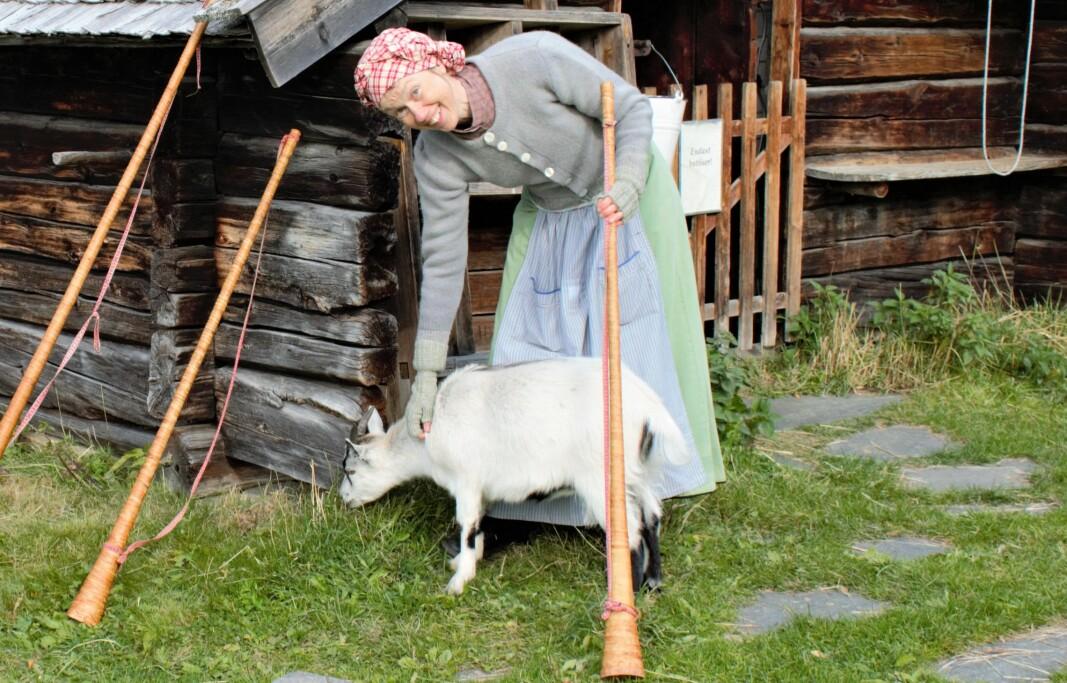 """Åsa Okutani tar en paus från näverluren och klappar geten Solveig som är av rasen jämtget. """"Det är många som tror att det är olika raser eftersom de ser så olika ut"""" säger den andra butösen för dagen, Tilda Lindqvist."""