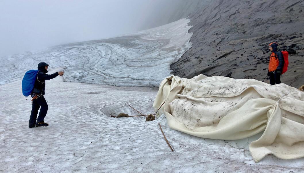 Kan ulldukar rädda våra glaciärer? På bilden syns Oskar Kihlborg och Tom-Oliver Hedvall vid den tvistade ullduken.