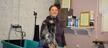 Ewa i Tulleråsen friserar hundar